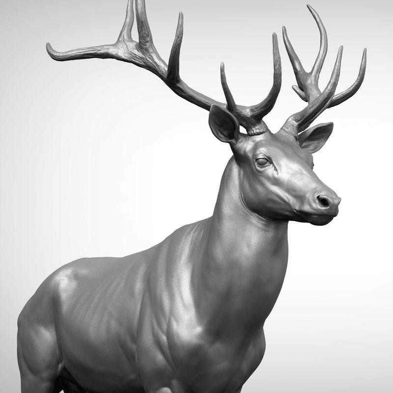 reed deer stag elk 3D model