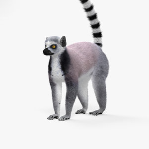 ring-tailed lemur 3D model