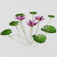 water lilies 3D