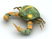 Crab Pyrhila pisum Low-poly 3D model