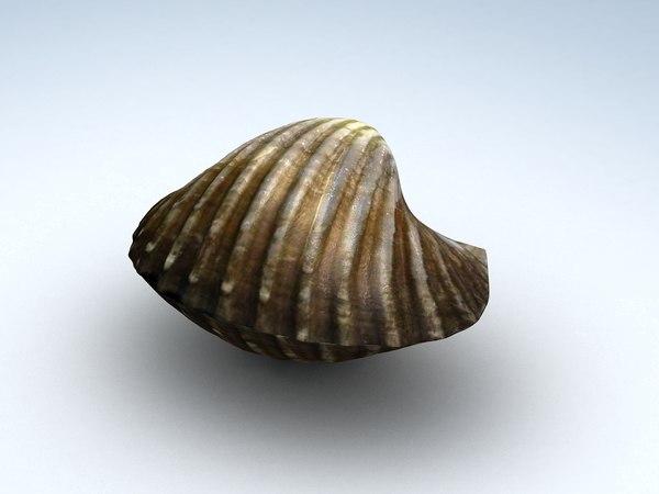 tegillarca granosa clam 3D model