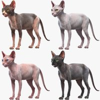 Sphynx Cats Collection