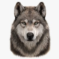 wolfs head fur 3D model