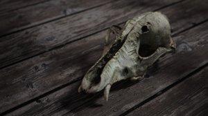deadly skull 3D