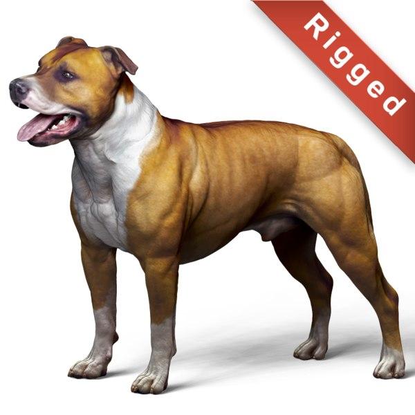 dog american pit bull model