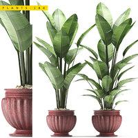 plant 184 3D model