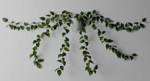 golden pothos plant 3D