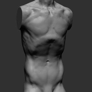 3D male torso model