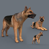 My Dog - 3d animated dog model