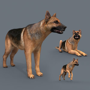 dog animation - 3D model