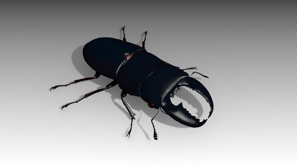 3D giant stag beetle