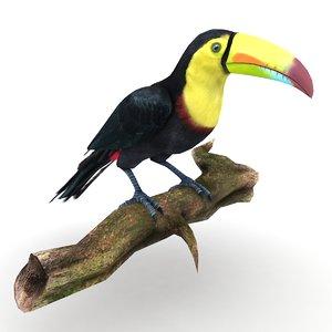 3D toucan