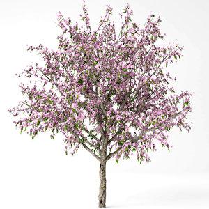 3D model peach tree