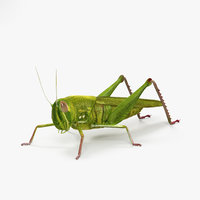 3D grasshopper crickets insect