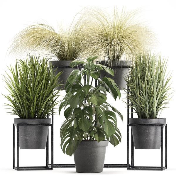 ornamental plants exotic 3D