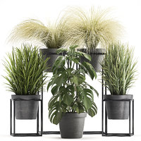 ornamental plants exotic 3D