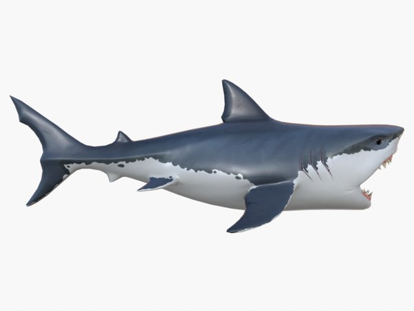 stylized shark 3D model