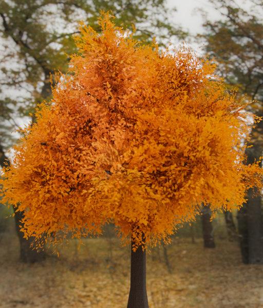 3D tree realistic model