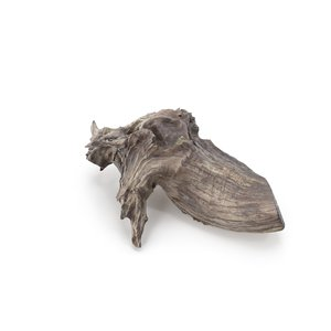 3D tree beach stump