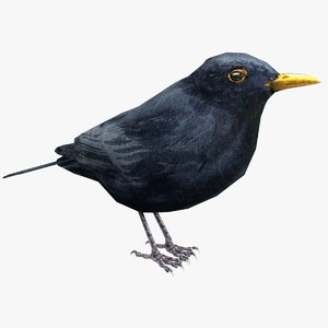3D common blackbird