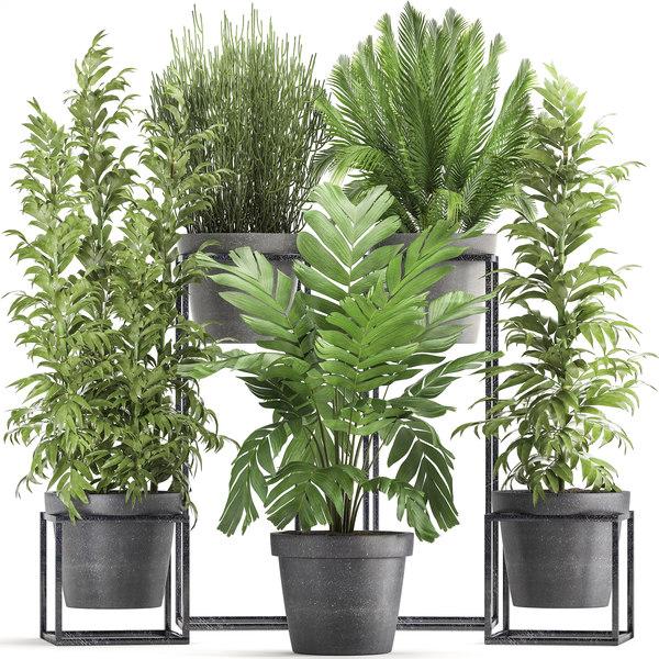 3D model plants exotic