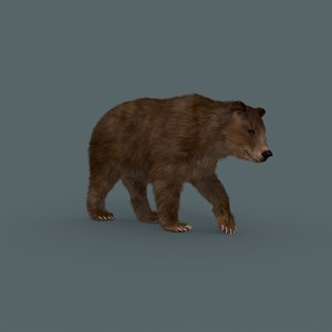 3D model wild bear grizzly animation