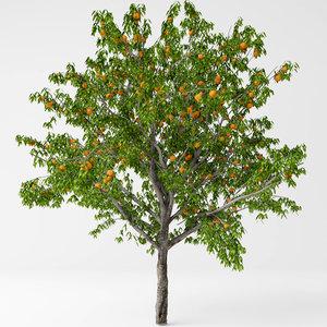 peach tree model