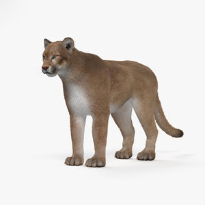 3D model cougar mammal animal