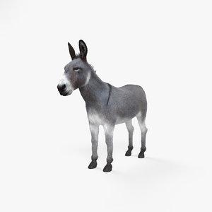 donkey animal nature model