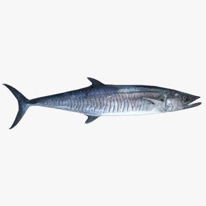 spanish mackerel 3D model