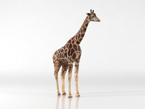 3D model giraffe animal zoo