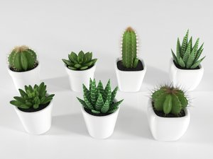 3D succulente cactus pot plant model
