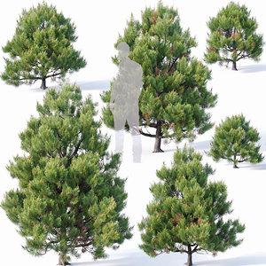 pines needles 3D model