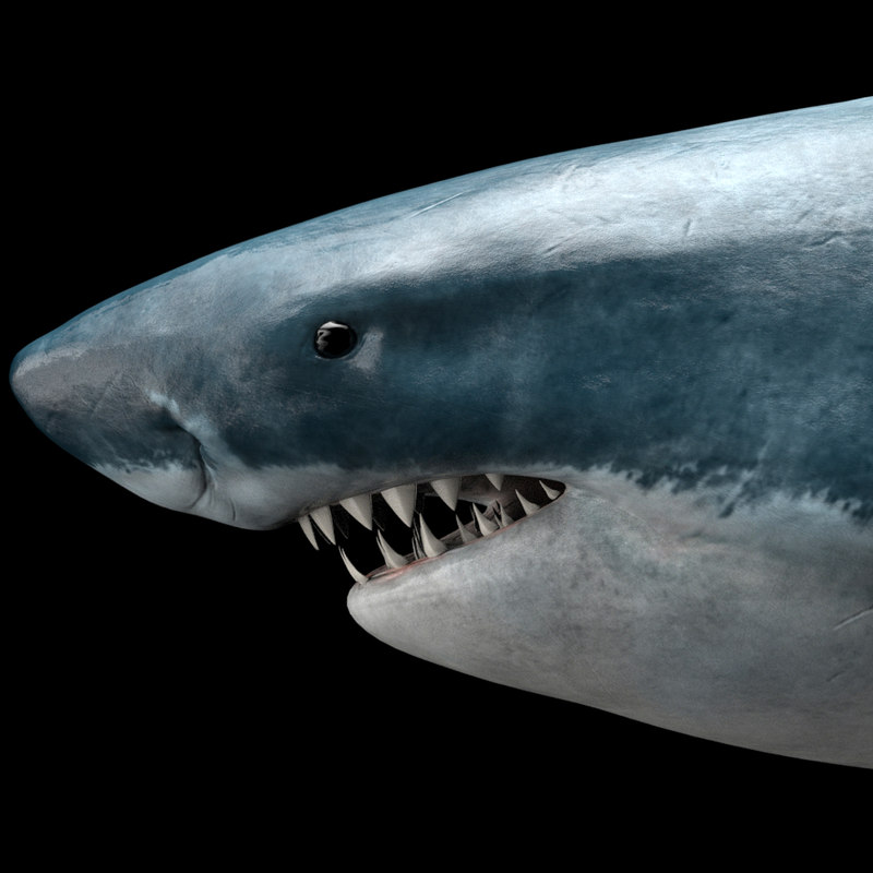 great white shark octane 3D model