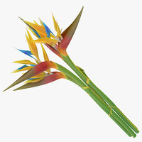 3d model of bird paradise bouquet -