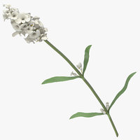 lavandula angustifolia white - 3D model