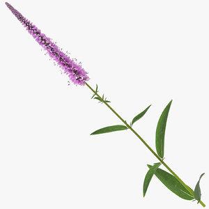 3D veronica longifolia pink -