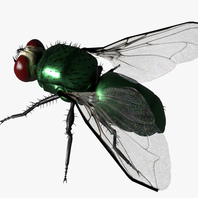fly green 3D
