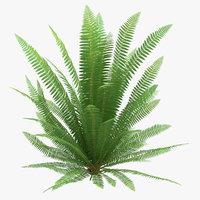 common ferns 04 3D