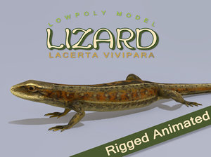 lizard lacerta vivipara model