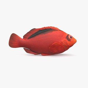 flame hawkfish 3D model