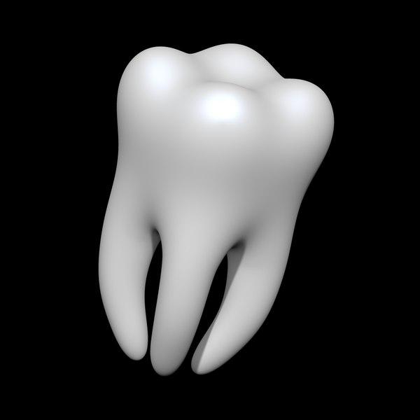teeth anatomy mouth 3D