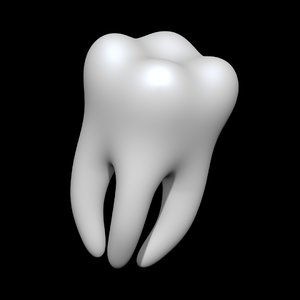 teeth anatomy mouth 3D