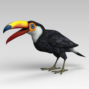 toucan color 3D