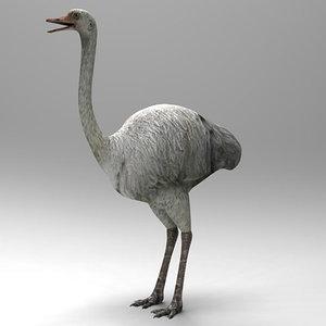 3D ostrich model