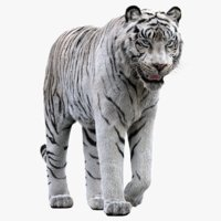 white tiger rigged fur 3D model