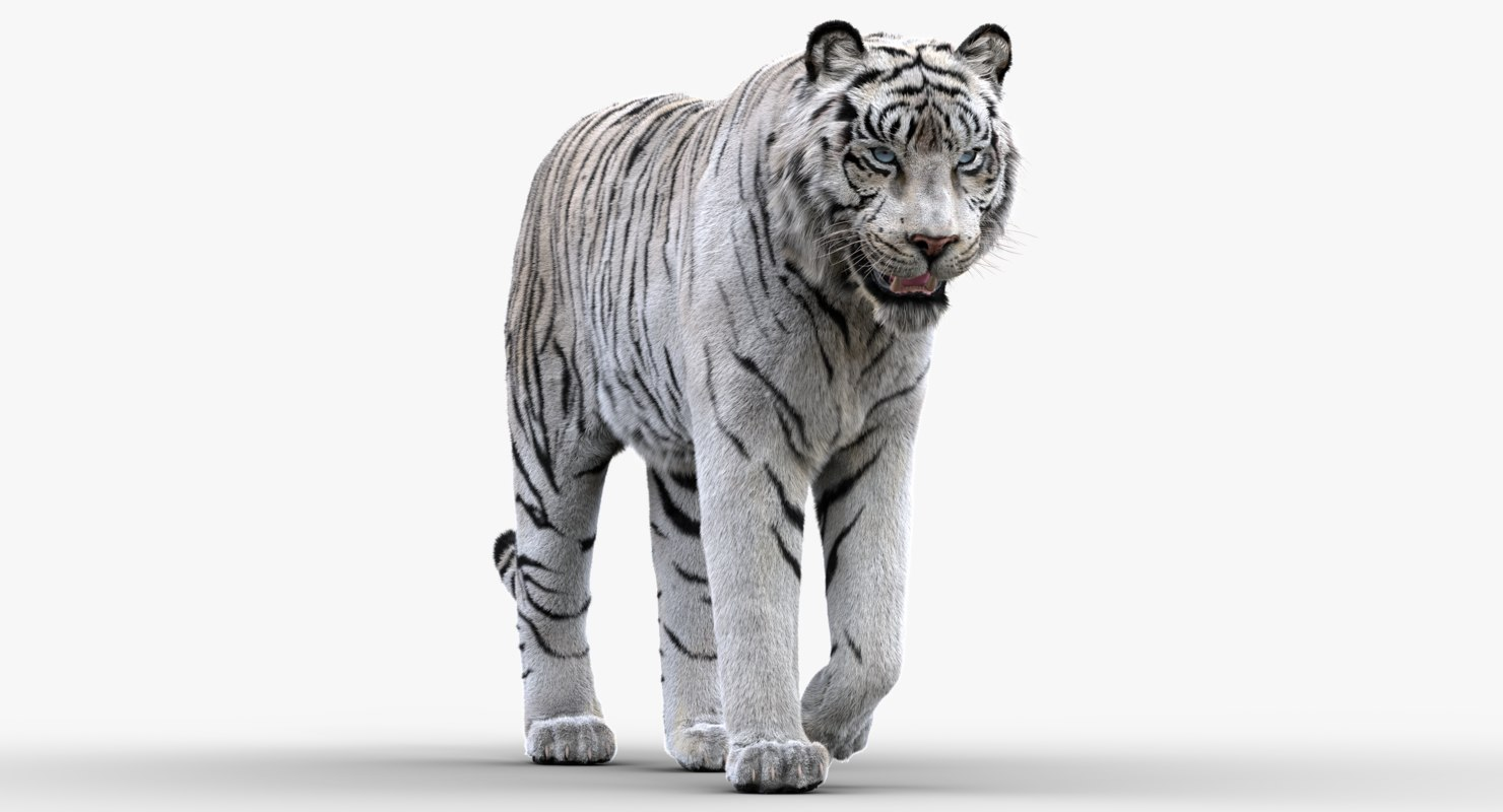 white tiger rigged fur 3D model