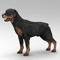 rottweiler beast dog 3D model