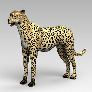 leopard mammal animal 3D model