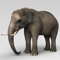 Indian Elephant 2